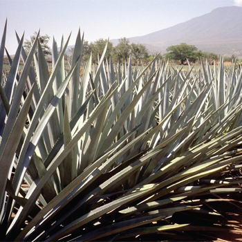 Tequila-brands-to-watch-2014