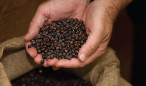 Juniper-berries-gin