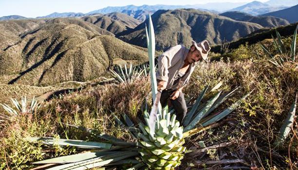 Mezcal-Vago-Agave-Tequila