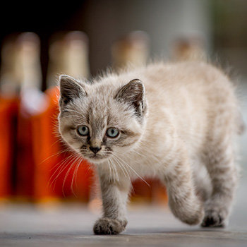 World's-most-loved-distillery-mousers