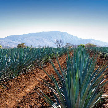 Tequila-brands-to-watch-2015