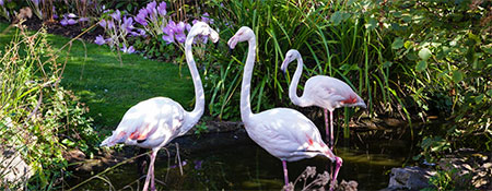 Global-Spirits-Masters-flamingos