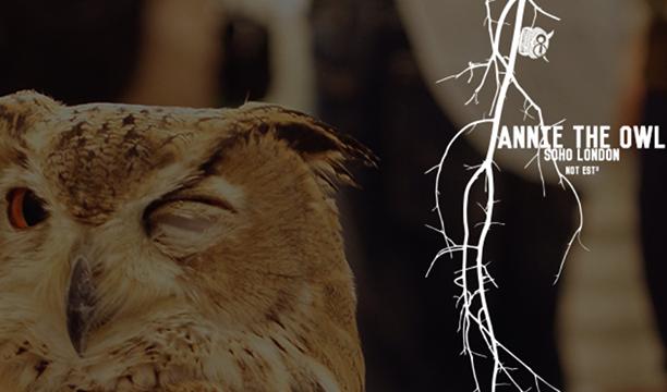 Annie-the-Owl