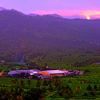 Saint-Lucia-Distillers
