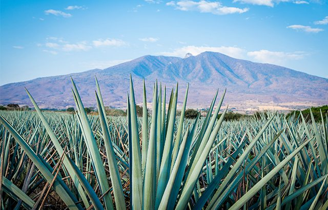 SB reveals the best-selling Tequila brands in 2017