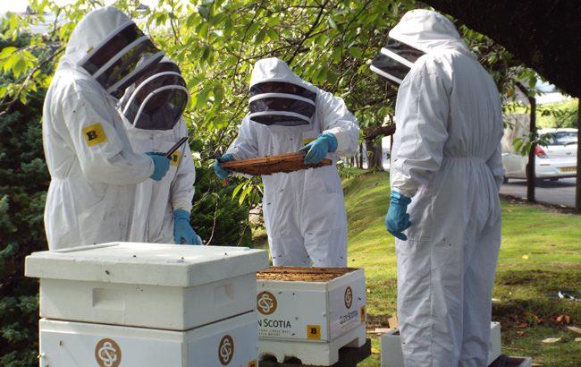 Glen-Scotia-bees
