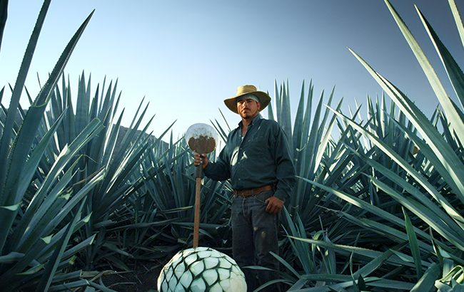 "Patrón: ""Cocktail culture continues to drive Tequila growth"""
