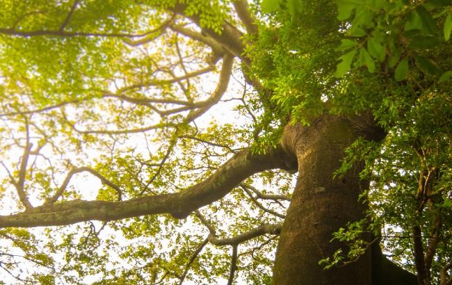 Flor de Cana Reforestation